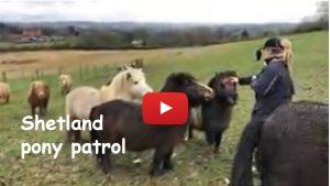Shetland pony patrol TV263 YT