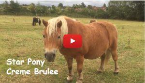 Star Pony - Creme Brulee