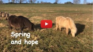 Spring and hope TV 273 YT