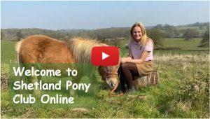 Welcome to Shetland Pony Club Online